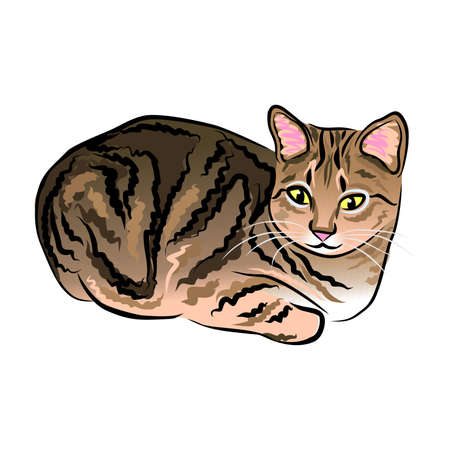 close up digital portrait of cute lying tricolor cat isolated on white background. Hand drawn sweet home pet. Greeting birthday card design. Clip art illustration, editable and resizeable graphics