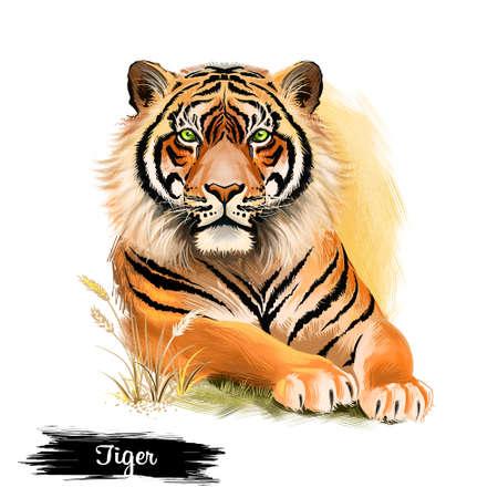 Cabeza de tigre aislados sobre fondo blanco ilustración de arte digital. Animales de safari de la fauna, símbolo del horóscopo chino, retrato de hacer depredador, gato rayado enojado grande, mascota de la selva mamífero Foto de archivo - 85898822