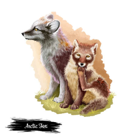 Arctic fox isolated on white background digital art illustration. Grown up animal and cute cub sitting on grass, wildlife mammal, polar foxes with grey fur, vertebrate mother and child with paw up