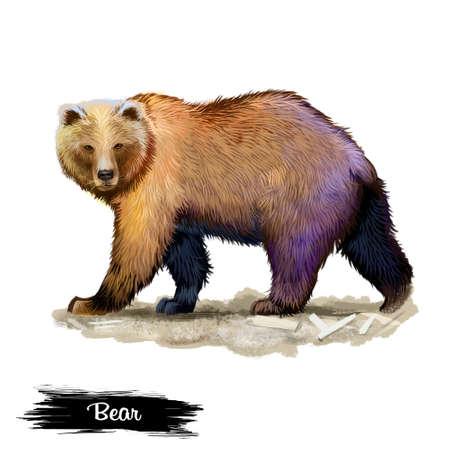 白の背景デジタルアートイラストに孤立したクマ。茶色の毛皮を持つ野生生物哺乳類、4足で ursus ハンター、毛皮のような野生の獣、しばしば動物園 写真素材