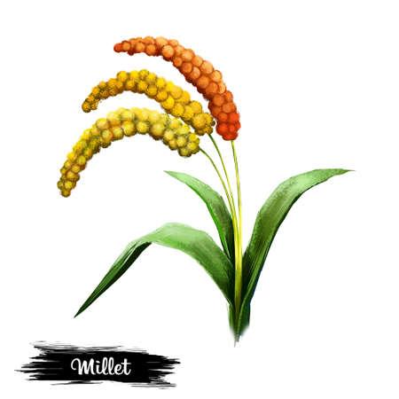 白い背景のデジタルアートのイラストに孤立したミレーの植物。種子と緑の葉を持つハーブ、天然トウモロコシ、ビーガン農学グラス、millets 粥のシ