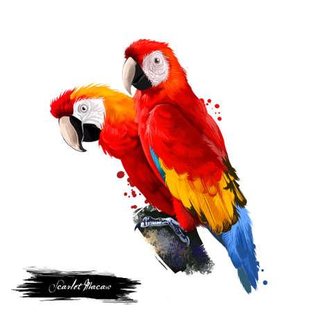 Scharlaken Macaw digitale kunst illustratie geïsoleerd op wit. Grote rode, gele en blauwe Zuid-Amerikaanse papegaaiengroep van neotropische papegaaien, ara's genoemd. Paar papegaaien die op tak zitten Stockfoto - 87650669