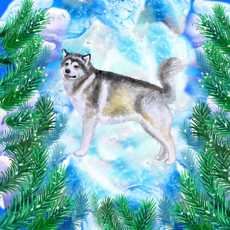 Alaskan malamute symbol of New Year and Christmas greeting card design with fir tree branches. Cute dog watercolor illustration isolated on snowy background, postcard in winter holidays concept