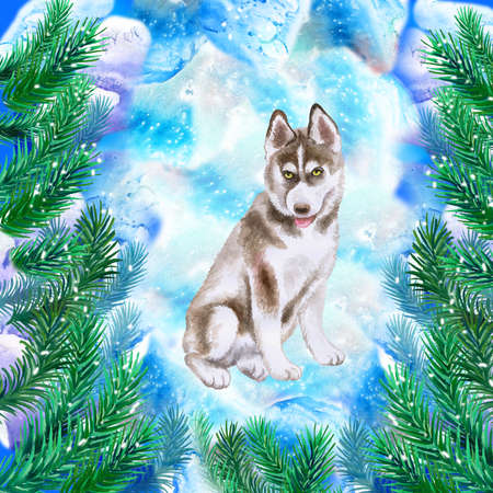 Husky puppy symbol of New Year and Christmas greeting card design with fir tree branches. Cute dog watercolor illustration isolated on snowy background postcard. Siberian Husky medium size dogs breed Stock Illustration - 91955486
