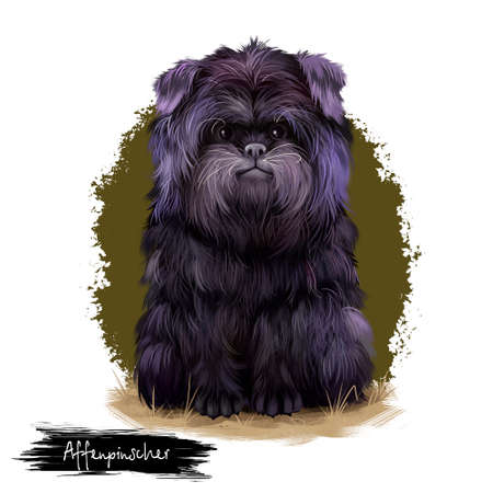 Affenpinscher dog breed digital art illustration isolated on white background. Cute domestic purebred animal. Monkey Terrier, is a terrier-like toy breed of dog. Pinscher-schnauzer royal portrait