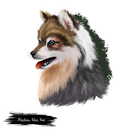 Alaskan Klee Kai dog breed digital art illustration isolated on white background. Cute domestic purebred animal. Portrait of alaskan pedigree, profile view of long haired doggy purebred print