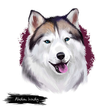 Alaskan husky breed digital art illustration isolated on white background. Cute domestic purebred animal. Malamute purebred portrait with north wolf wide open mouth, arctic dog with long fur.