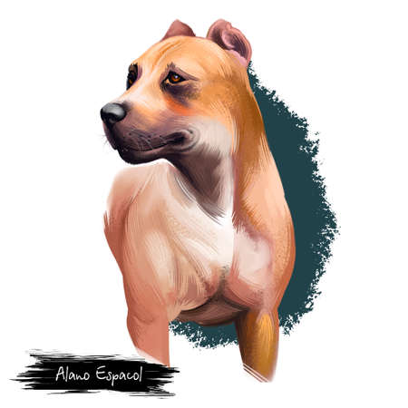 Alano Espa�ol breed digital art illustration isolated on white background. Фото со стока