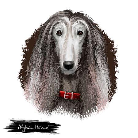 Afghan Hound breed digital art illustration isolated on white background. Cute domestic purebred animal. Hound distinguished by its thick, fine, silky coat. Kuchi Baluchi Barakzai Shalgar Hound Standard-Bild