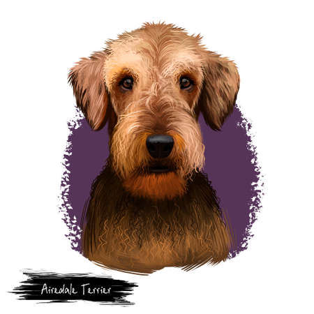 Airedale Terrier breed digital art illustration isolated on white background. Cute domestic purebred animal. Bingley and Waterside Terrier medium-length coat with harsh topcoat and soft undercoat. Stok Fotoğraf