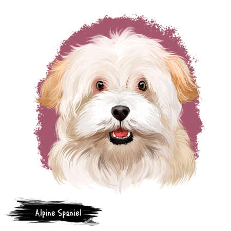 Alpine Spaniel dog digital art illustration isolated on white background. Spaniel large dog notable for its thick curly coat, curlier than that of the English Cocker Spaniel, cute white dog head Stock Photo