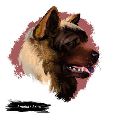 American Akita dog digital art illustration isolated on white background. Large breed of dog originating from Japan. Akita Ken Inu short double-coat similar to that of many other northern spitz breeds 写真素材