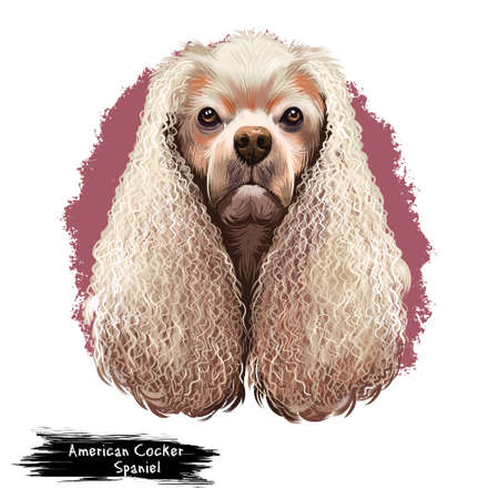 American Cocker Spaniel dog digital art illustration isolated on white background. Breed of sporting dog with medium long silky fur on the body and ears closely related to the English Cocker Spaniel.