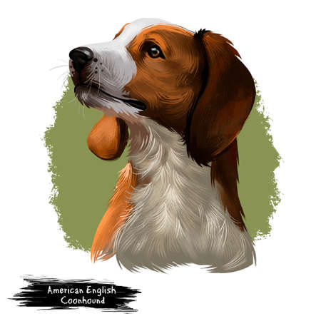 American English Coonhound Stockfoto - 97290532