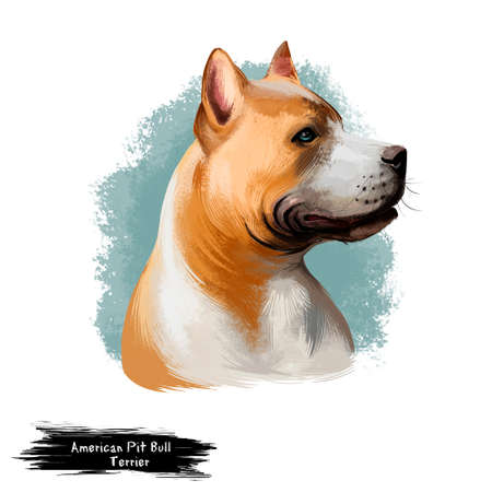 American Pit Bull Terrier Stockfoto - 97364849