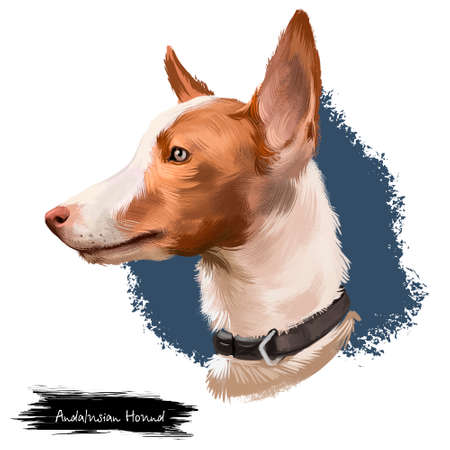 Andalusian Hound dog digital art illustration isolated on white background. Dogs similar to other Iberian breeds such as the Ibizan Hound, the Portuguese Podengo, the Podenco Canario and the Maneto