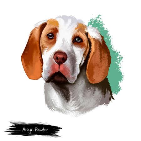 Digitale Kunstillustration des Ariege-Zeigerhundes lokalisiert auf Weiß. Braque de Ariege Pointing Dog Pointer, Hunderasse, zeigt Waffenhundeart. In erster Linie als Jagdhund gehalten, nicht als Haustier oder Ausstellungshund Standard-Bild - 97364857