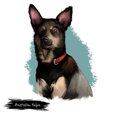 オーストラリアのケルピー犬デジタルアートイラストは、白に分離されています。オーストラリアのケルピー、または単にケルピーは、テキストで