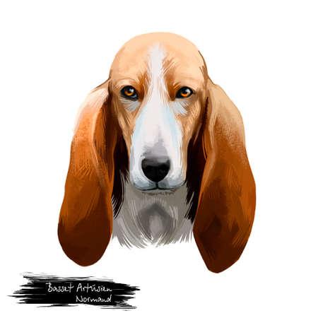 Basset Artésien Normand or Norman Artesian Basset short-legged hound type French dog digital art illustration isolated on white background. Cute pet hand drawn portrait. Graphic clip art design 免版税图像