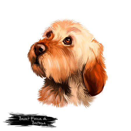 Basset Fauve de Bretagne or Fawn Brittany Basset short-legged hunting scent hound type dog digital art illustration isolated on white background. Cute pet hand drawn portrait. Graphic clip art design Banque d'images - 97470645