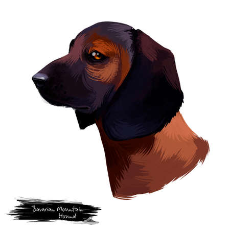 Bavarian Mountain Hound dog digital art illustration isolated on white background. German origin scenthound breed dog. cross between Bavarian and Hanover Hound. Pet hand drawn portrait. Graphic design