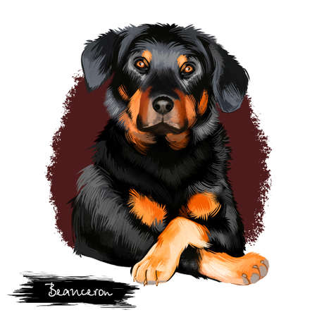 Beauceron, Berger de Beauce or Bas Rouge guard herding breed dog digital art illustration isolated on white background. French origin sheepdog. Cute pet hand drawn portrait. Graphic clip art design