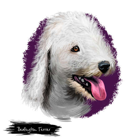 Bedlington Terrier or Rothbury Terrier small terrier dog digital art illustration isolated on white background. English origin companion dog. Cute pet hand drawn portrait. Graphic clip art design Stock Photo