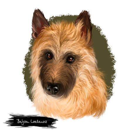 Belgian Laekenois, Belgian Shepherd Dog, Laeken herding breed dog digital art illustration isolated on white background. Belgian origin working dog. Cute pet hand drawn portrait. Graphic clip art