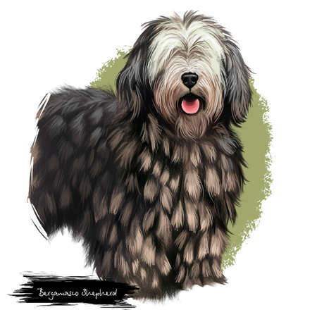 Bergamasco Shepherd, pastore bergamasco, Bergamasco dog digital art illustration isolated on white background. Italian origin herding, working dog. Cute pet hand drawn portrait. Graphic clipart design