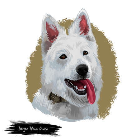 Berger Blanc Suisse or White Swiss Shepherd Dog breed showing tongue. Digital art illustration isolated on white background. Switzerland origin working dog. Pet hand drawn portrait. Graphic clip art