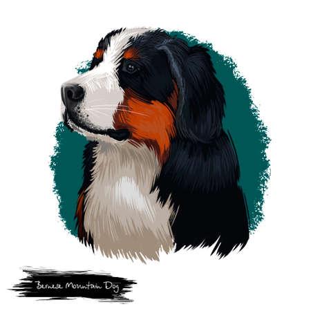Bernese Mountain Dog, Berner Sennenhund dog digital art illustration isolated on white background. Switzerland origin Sennenhund-type guardian dog. Cute pet hand drawn portrait. Graphic clipart design