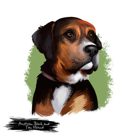 Austrian Black and Tan Hound dog breed digital art illustration isolated on white. Austrian Black and Tan Hound is a breed of dog originating in Austria. Black color dog white collar, head portrait