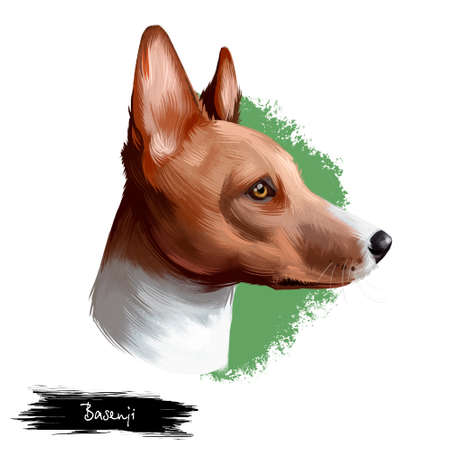 Basenji breed of hunting dog digital art illustration isolated on white. Profile portrait of ancient basal breed Basenji, cute brown hair dog clipart, pedigree dog breed, smart puppy for web print