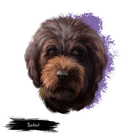 Barbet dog breed digital art illustration isolated on white. Medium-sized French water dog with beard, head of cute barbet dog, portrait of puppy domestic animal with text, pedigreed long haired dog Stockfoto