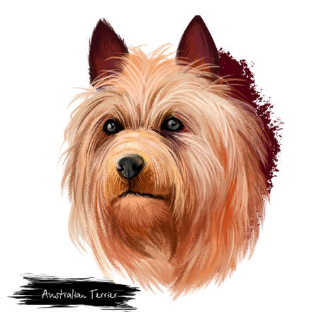 Australian Terrier dog breed digital art illustration isolated on white. Small breed of terrier dog type. The breed was developed in Australia, brown long hair puppy portrait of head, lovely pet