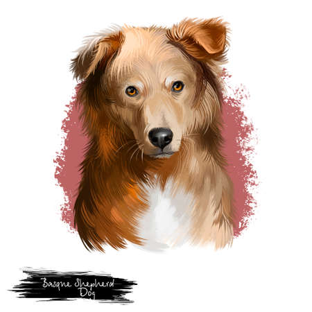 Basque Shepherd Dog landrace breed of dog digital art illustration isolated on white. Cute brown hair dog with bright collar, pedigree dog breed, smart puppy for web print design, dog head