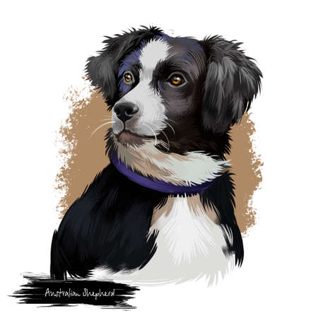 Australian Shepherd dog breed digital art illustration isolated on white. Aussie medium-sized breed of dog of black and white color, similar in appearance to popular English Shepherd and Border Collie Stock Illustration - 99700077