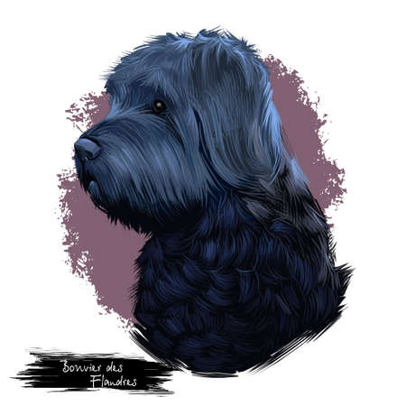 Bouvier des Flandres dog breed isolated on white background digital art illustration, herding dog breed rough-coated dog of rugged appearance, profile view of black carnivora domestic pet animal
