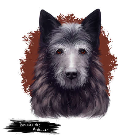 Bouvier des Ardennes dog breed rare dog breed from Belgium isolated on white background digital art illustration, Bouvier De Ardennes medium length, coarse, wiry hair, with a beard and eyebrows