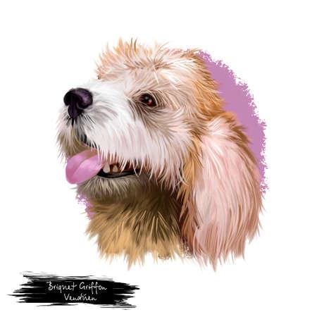 Briquet Griffon Vendéen dog breed isolated on white background digital art illustration. Hunting dog originating in France, dog head portrait, clipart realistic design puppy hand drawn print