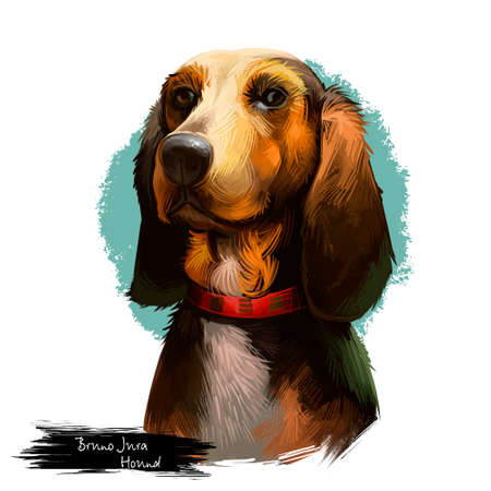 Bruno Jura Hound dog breed isolated on white background digital art illustration. Hunting hound dog head portrait, clipart realistic design of dachshund in collar, brown puppy hand drawn print Stockfoto - 99808853