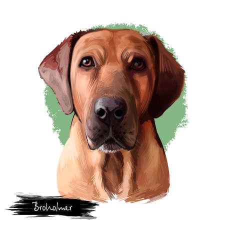 Broholmer dog breed isolated on white background digital art illustration. Danish Mastiff large Molosser breed of dog from Denmark, head portrait of charming carnivore, domestic pet animal Mastiff Stock fotó