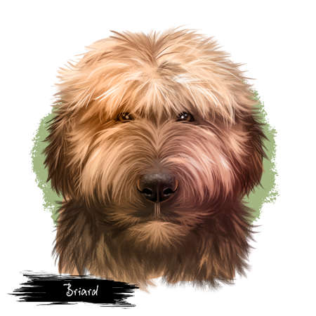 Briard dog breed isolated on white background digital art illustration. Herding dog, originally from France, dog head portrait, clipart realistic design puppy hand drawn print, Berger de Brie Фото со стока