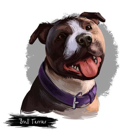 Bull Terrier dog breed isolated on white background digital art illustration. Egg shape head dog in leather collar, Bull terrier portrait hand drawn realistic clipart showing tongue, domestic pet Stock Photo