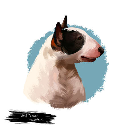 Miniature Bull Terrier dog breed isolated on white background digital art illustration. Egg shape head dog, Bull terrier portrait hand drawn realistic clipart showing tongue, domestic pet profile view