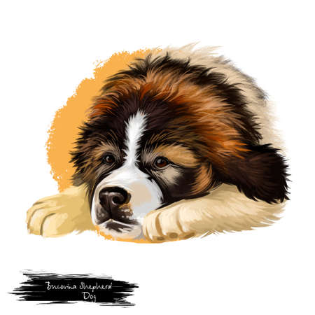 Bucovina Shepherd Dog breed isolated on white background digital art illustration. Largest and powerful, rustic livestock guardian dog, with strong watch dog qualities, domestic pedigree pet animal