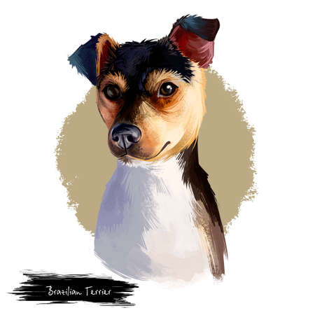 Brazilian Terrier dog breed isolated on white background digital art illustration. Fox terrier breed dog developed in Brazil, cute pet hand drawn portrait. Graphic clipart design realistic carnivore Stock Photo
