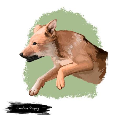 Carolina Puppy dog breed isolated on white background digital art illustration. Carolina dog landrace of medium-sized, feral dog. Cute pet hand drawn portrait. Graphic clipart design realistic animal