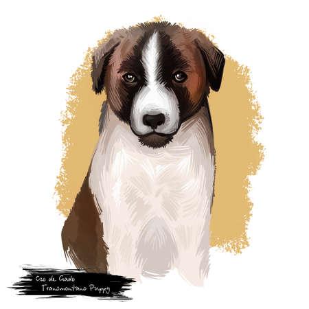 Cão de Gado Transmontano Puppy dog breed isolated on white digital art illustration. Transmontano Mastiff or Transmontano Cattle Dog rare molosser working giant dog breed. Cute pet hand drawn portrait