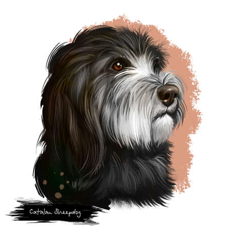 Catalan Sheepdog dog breed isolated on white background digital art illustration. Breed of Catalan Pyrenean dog used as sheepdog. Cute pet hand drawn portrait. Graphic clipart design realistic animal Stock Photo
